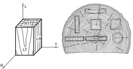 fibre orientation of wood